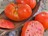 beefmaster-tomato-m