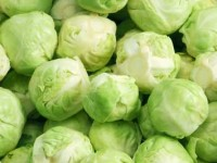 brussel_sprouts1