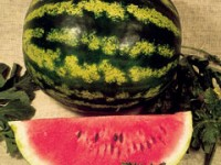 crimson-sweet-watermelon-m