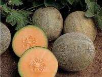 melon-ambrosia