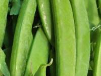 peas_sugarpea