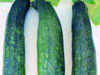 squash-zucchini-m