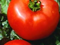 tomato-bigboy-m